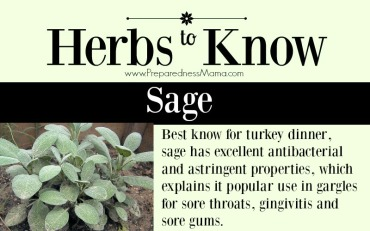 herbs-to-know-sage