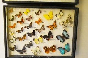 National-Museum-of-Natural-History-0661